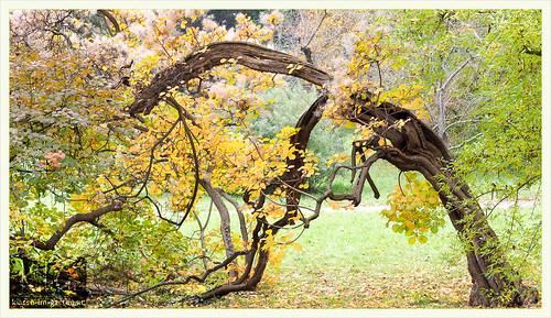 Botanischer Garten Schoenbrunn | 2016-10