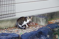 Today's Cat@2016-10-31 (masatsu) Tags: cat thebiggestgroupwithonlycats catspotting pentax mx1
