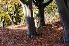 Autumn Gold (John R Woodward Photography) Tags: autumn gold autumngold colourful countryside shropshire tree leaf leaves england sun shadows shade canon canondslr canonllenses canon6d canon6dwithllenses canoneos llenses johnrwoodwardphotography jrw