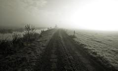 Breaking sunlight (M a u r i c e) Tags: sunlight sunshine sun sunrise grass frozen frost mist dew netherlands polder wideangle ultrawidezoom efs1022mm road path water