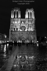 Rainy Reflection - Notre Dame (Bridget Calip - Alluring Images) Tags: 2016 alluringimagescolorado archdioceseofparis architecture bridgetcalip church city europe exterior france gothic history night notredame ourladyofparis paris portrait rain religion sky travel allrightsreserved beautiful building cathedral chimeras copyrighted crownofthorns dame dark de famous flyingbutress french frenchgothic gargoyles heritage holynails lamp landmark light medieval notre reflection site square unesco view usa