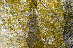 Rima Dadenji, prayers upon the beloved whose heart was washed with snow, 2016 (Rima Dadenji) Tags: yellow nature autumn fall leaves trees forest woods agroforestry impressionism permaculture ecology ecoforestry fuji fujifilm fujifilmxt10