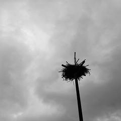 Nest, Sauvie Island, Oregon (austin granger) Tags: nest sauvieisland oregon post bird habitat square gf670