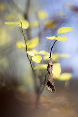 Fading autumn (Fabien Husslein) Tags: autumn automne bokeh light leaves feuilles foret forest wood nature fading