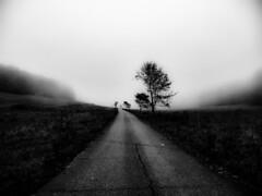 long way to winter (LiterallyPhotography) Tags: bw schwarzweis black white mnsingen schwbischealb badenwrttemberg wald biosphrengebiet bume weg strase herbst winter laub