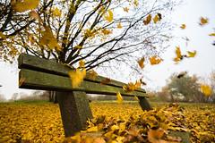 Herbst 2016 (Burr_Brown) Tags: herbst wald spaziergang laub fällt von den bäumen wild erkältungszeit blätterwerk nikon 1635