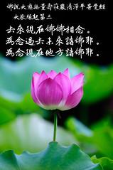 Amitabha sing (廣結善緣 歡迎分享 慈悲的南無阿彌陀) Tags: 南無阿彌陀佛 amitabha amifofo 大教緣起第三 佛說大乘無量壽莊嚴清淨平等覺經