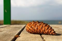 pine cone (Halit Volkan Cengiz) Tags: pinecone halitvolkancengiz canon eos green dof iznik lake wood line macro peaceful 60d abstract minimalist