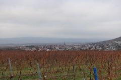 In den Weinbergen über Gau-Algesheim