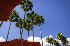 Palm Trees and Umbrellas (Keith Lovelady's Photography) Tags: sky pool florida palmtrees umbrellas