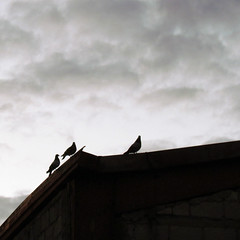 Three is the half of six (Esteban Manrique) Tags: white bird rooftop church dead death grey one three fly cool gloomy dove gloom block crow six wander turninto