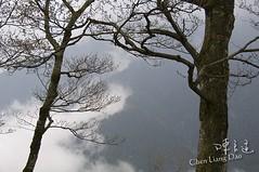 DAO-04461 南部橫貫公路 玉山山脈 雲霧