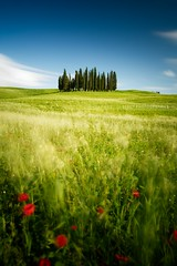 Tuscany windy fields (Beboy_photographies) Tags: trees tree field spring san long exposure wind windy tuscany poppies fields polarizer dorcia quirico