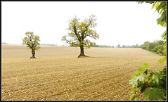 Lonely couple! (kev350d) Tags: trees field canon landscape open sparse 1740l