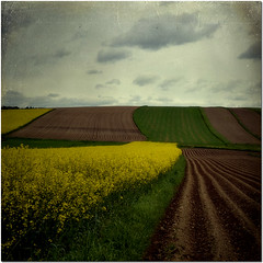Landscape (pixel_unikat) Tags: plant nature field grass yellow dark landscape austria row rape textured waldviertel loweraustria thankstoskeltalmessfortexture