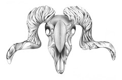 Ram Illustration (Adrianna Grezak) Tags: white black art animal illustration digital photoshop painting mammal grey sketch drawing gray sketching adobe draw ram greyscale