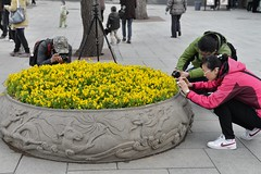 Photo, photo ! (Solange B) Tags: china flower macro fleur beijing tourists photograph beihaipark chine photographe pkin touristes parcbeihai
