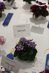 Irish Luck (khufram) Tags: convention africanviolet 2013 avsa irishluck