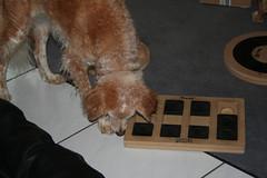 Suchspiel 012 (leeder-five) Tags: suchspiel