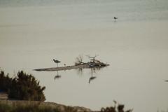 DSC_9454 (lecielrouge) Tags: spain wildlife july naturereserve eurotrip lamarina 2013 elpinet
