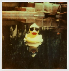 Rubber Duck (tobysx70) Tags: california ca red toby color reflection wet pool sunglasses swimming project polaroid sx70 la duck los cool angeles beak rubber hills tip shade hollywood sonar hancock 70 impossible the px colorshade theimpossibleproject tobyhancock impossaroid px70cool
