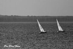 La course... / Racing! (Pentax_clic) Tags: bw lake sailboat race noiretblanc pentax quebec lac course kx vaudreuil deriveur robertwarren