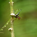"""Jungle Cricket III • <a style=""""font-size:0.8em;"""" href=""""http://www.flickr.com/photos/101688182@N03/9784898604/"""" target=""""_blank"""">View on Flickr</a>"""