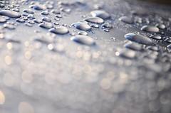 up or down (jarrowka ( )) Tags: macro water droplets bokeh makro woda krople jarrowka