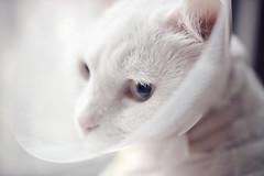 () Tags: cat canon     mixcat  eosm3