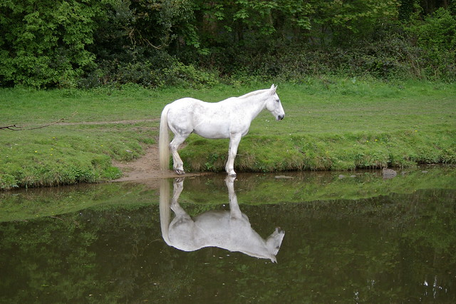 White horse by the Leeds and LIVERPOOL Canal at Calverley
