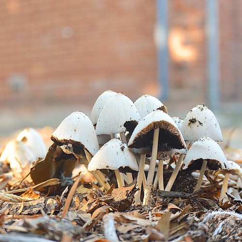 Won't you take me to, fungal town. #fungus #dof #decay #rsa_nature #mushroom #tv_depthoffield