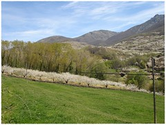 Amplia pradera junto al Jerte. (margabel2010) Tags: paisajes rboles y tierra praderas rbolesfrutales rbolesenflorcerezoscerezosenflorpostesmontesmontaasvallesvalledeljertecieloytierranubescableshilerascielo