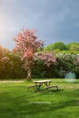 Parc Jean-Drapeau - Montral (Lima Pix) Tags: canada nature three spring montreal picnik parcjeandrapeau dsc05757