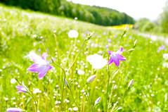 Daydream - Meadow in Springtime (gerhard.boepple) Tags: