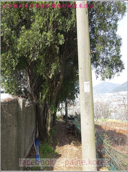麗水海上纜車與紫山公園 (72).JPG