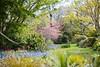 _MG_3601 (TobiasW.) Tags: spring frühling fruehling garden gardenflowers gartenblumen gärten garten blue mountains nsw australien australia backyard public