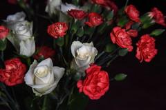 DSC_3216 (PeaTJay) Tags: nikond750 reading lowerearley berkshire macro micro closeups gardens indoors nature flora fauna plants flowers rose roses rosebuds carnations