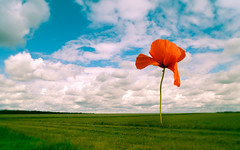 Once there was... (Ans van de Sluis) Tags: ansvandesluis surreal art fineart poppy nature landscape flower field grass clouds sky