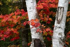 Happy Thanksgiving Everyone (Brenda HF) Tags: canada thanksgiving canadianthanksgiving ontario autumn fall