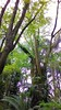 Mãos de longos dedos (José Argemiro) Tags: galhos ramos textura contraste parque jardim floresta ar aéreo ramification branches texture contrast park forest garden aerial air mãos dedos fingers hands wood grove arvoredo mata bosque biodiversidade botânica botany biodiversity