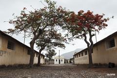 (Diego RB.) Tags: acacias africa amarelo bege caboverde politico prisao tarrafal