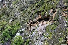 En el risco. (Howard P. Kepa) Tags: extremadura caceres valledeljerte riscocabezamerina buitres nidos riscos escarpado vegetacion