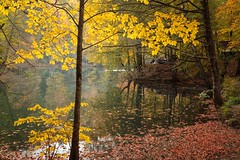 Light of life... (Explored 20.10.2016) (RKAMARI) Tags: yedigllernationalpark autumn colour forest lake landscape nature outdoor serenity travel warm water