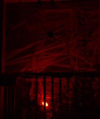 Web of Terror (rumimume) Tags: potd rumimume 2016 niagara ontario canada photo canon 550d t2i sigma halloween fall autumn night