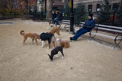 washington square park dog run (Charley Lhasa) Tags: ricohgrii grii 183mm 28mm35mmequivalent iso400 secatf28 0ev aperturepriority pattern noflash r010525 dng uncropped taken161124141759 uploaded161125005930 3stars flagged adobelightroomcc20157 lightroomcc20157 adobelightroom lightroom charley charleylhasa lhasaapso dog dogs washingtonsquareparkdogrun dogrun bigdogrun washingtonsquarepark wsp nycparks citypark urbanpark greenwichvillage manhattan newyorkcity nyc newyork ny tumblr161124 httpstmblrcozpjiby2f5fyaf
