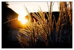 sunset backlight (08dreizehn) Tags: 08dreizehn gegenlicht licht olympusm17mmf18 olympuspenepl7 sonnenuntergang thomashassel abends backlight coucherdusoleil evening intheevening lesoir light nullachtdreizehn sunset reutlingen deutschland lumire badenwrttemberg