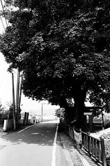 上南片_9 (Taiwan's Riccardo) Tags: 2016 taiwan 135film bw negative kodakdoublex5222 rangefinder plustek8200i rolleilens hft sonnar fixed 40mmf28 l39 ltm 新竹縣 關西 上南片