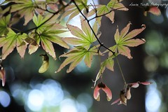 (latositti) Tags: latositti ortobotanico bologna botanicalgarden fall autunno