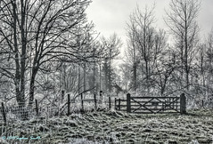 Every moment is precious (Ninja Dog - ) Tags: 2015 january winter warkton northamptonshire eastmidlands england english uk nikon d80 raw landscape countryside rural nature natural mist misty trees highkey mono blackandwhite moody gateway fence frosty cold