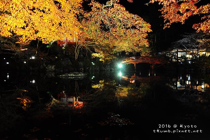 2016醍醐寺夜楓7.JPG